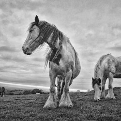 Dublin-Mountains-horses