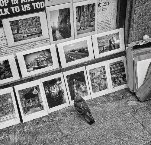 The-Inspector.Pigeon looking at photographs